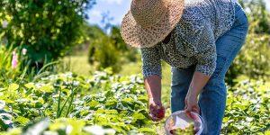 o que plantar na agricultura familiar