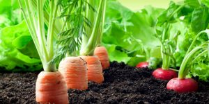 coisas para plantar na horta para vender