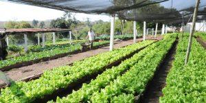 como fazer horta comercial