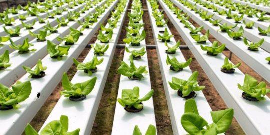 hortas organicas e hidroponicas