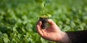 o que plantar para ganhar dinheiro rápido