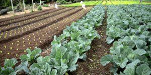 como ganhar dinheiro cultivando em terreno pequeno